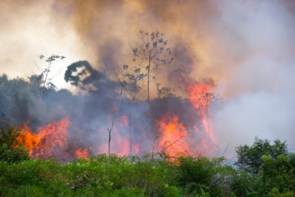 Waldbrände-im-Amazonas-Fakten