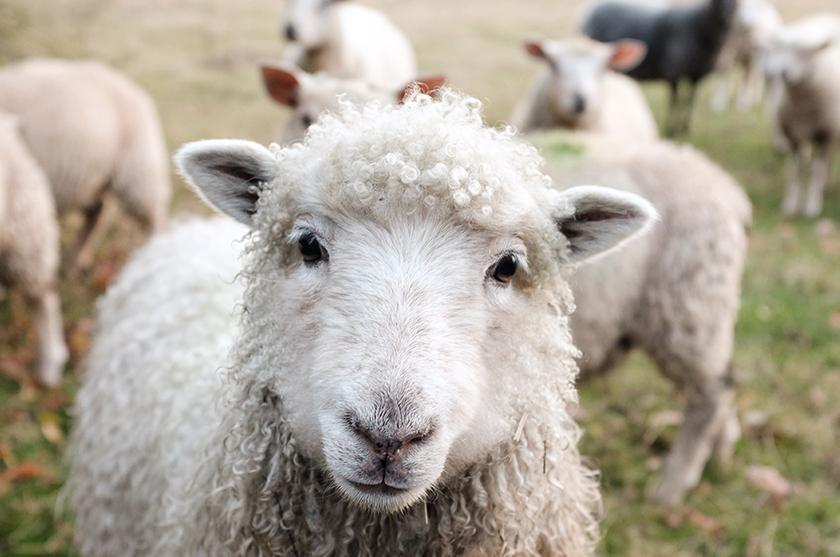 Vegane Mode ohne Schaf